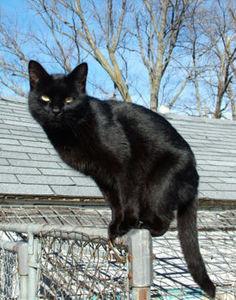 Elegía por la muerte de un gato callejero